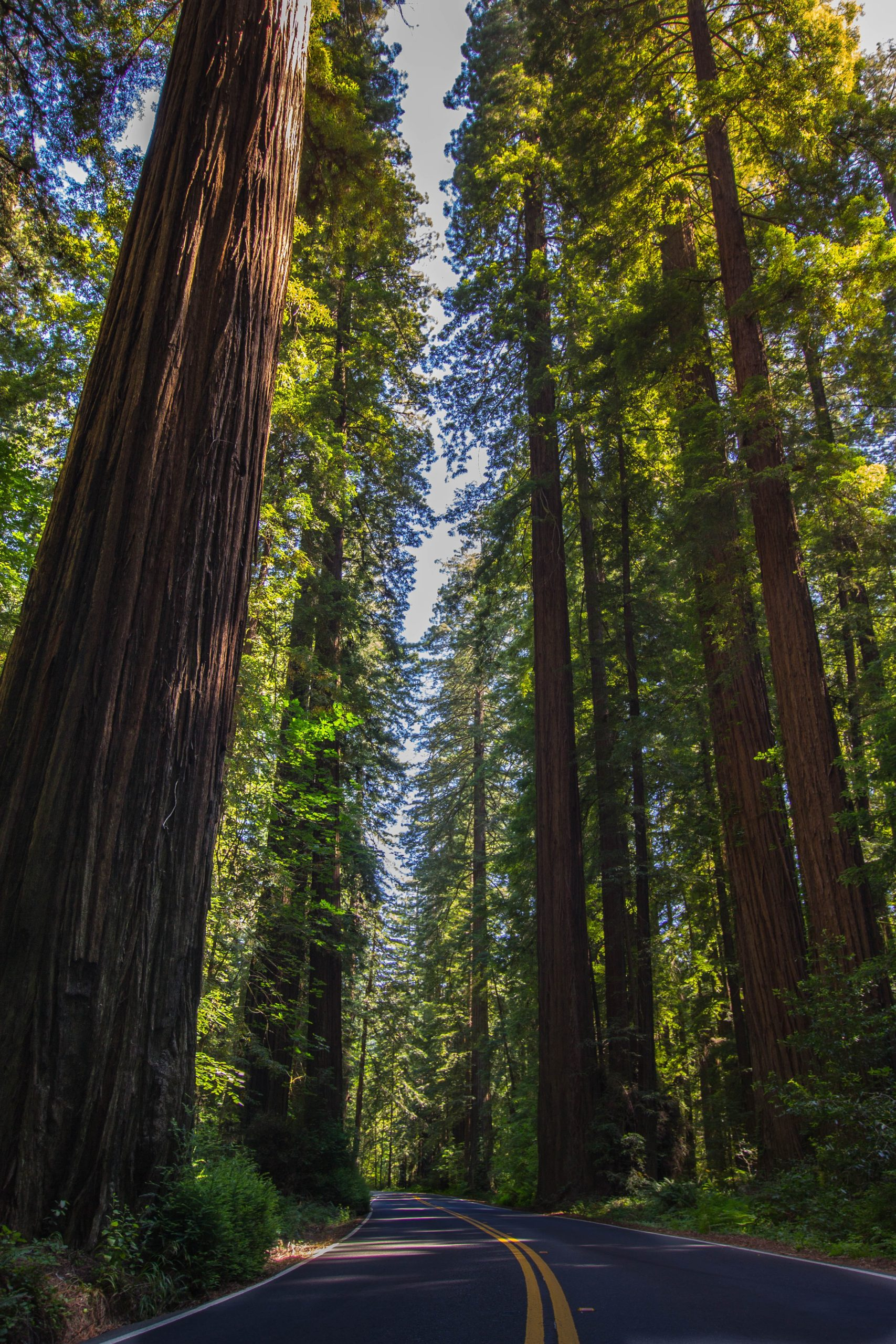 Redwood National Park- The Top 9 California National Parks | CaliQuests